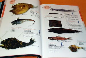 Deep-Sea-Fish-Encyclopedia-book-japan-japanese-0589