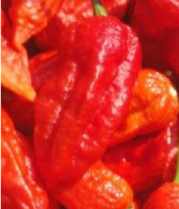 Extremely Spicy 100 Seeds Bio Chilli Ghost Bhut Jolokia
