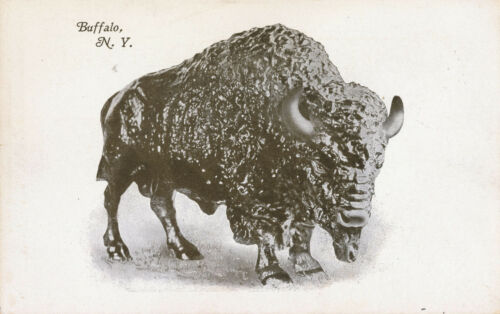 c1905 Buffalo on Buffalo, New York Undivided Back, Unused Postcard