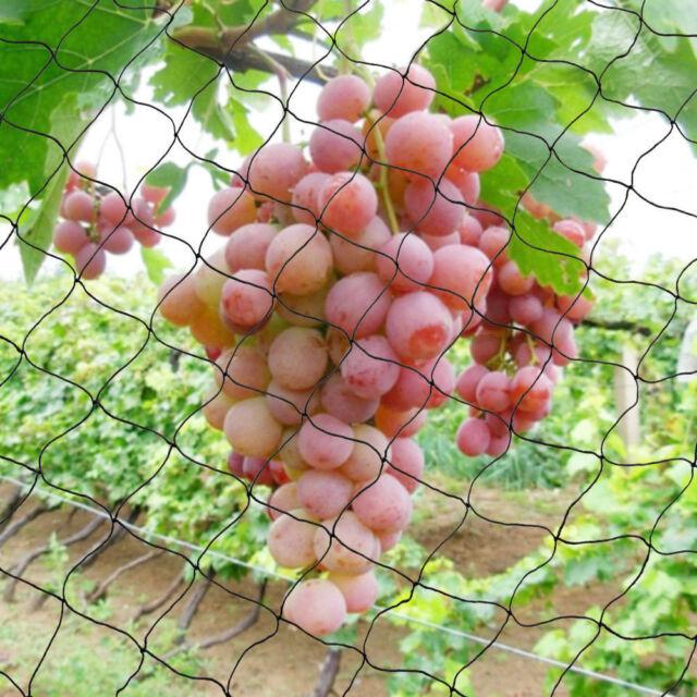 30mx15m Fruit Tree Plant Anti Bird Netting Plant net/Fruit Tree Bird Netting AU