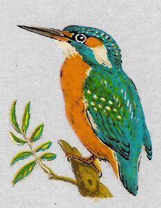 free photo of kingfisher bird