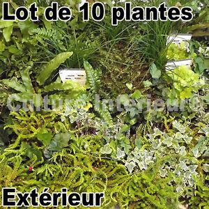lot de 10 plantes pour mur v g tal ext rieur cr ation. Black Bedroom Furniture Sets. Home Design Ideas
