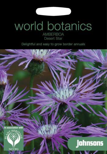 50 semi Johnsons mondo botanics FIORE-amberboa DESERTO STAR
