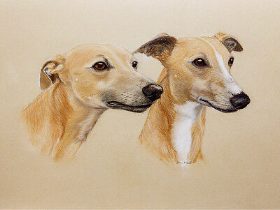 WHIPPET CHARMING DOG GREETINGS NOTE CARD TWO DOGS BEAUTIFUL HEAD STUDY