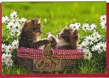 Klappkarte mit Umschlag: zwei Katzen in einem Eierkorb - two cats in a basket