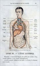 MÉDECINE - DISPOSITION des VISCÈRES dans le CORPS HUMAIN -  Gravure du 19e
