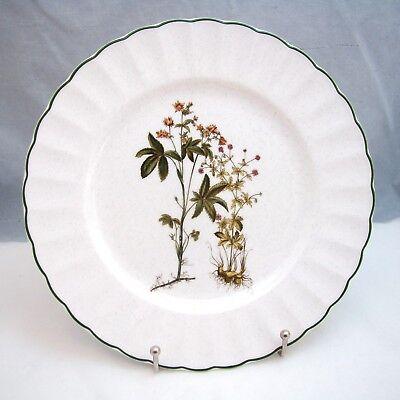 Antiquitäten & Kunst Mikasa Ultra Ceram Botanik Dn002 Salatteller S 21.3cm Verkaufspreis
