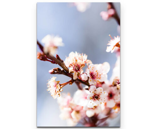 Leinwandbild Kirschblüten im Frühling