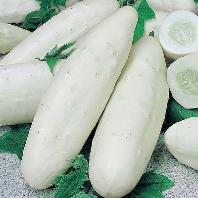 Cucumber Seed Alesha F1 from Ukraine organic vegetable seeds