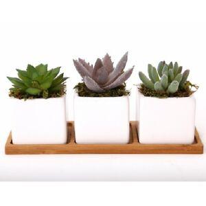 Artificial Suculenta Plantas En Ollas Madera Bandeja Falso Cactus Regalo