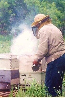 HONEY BEE KEEPING BEES HIVE SMOKE NATURAL PINE NEEDLES 1//4 POUND SMOKER FUEL