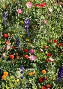 Wildflower-Seeds-Deer-Resistant-Mix-Wildflower-Mix-1-000-Seeds