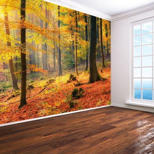Autumn Forest Wallpaper woods woodland sunrise sunset Wall Mural Photo