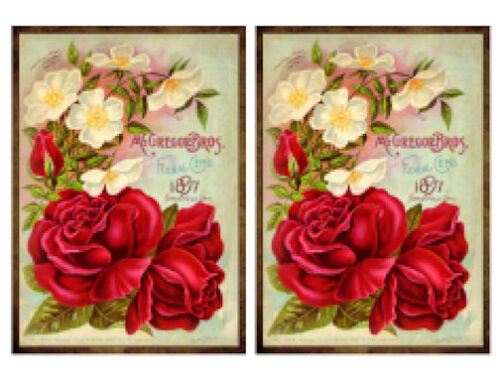 Vintage Image Shabby Victorian Seed Packet Roses Label Waterslide Decals FL261
