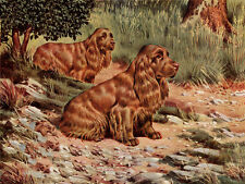 SUSSEX SPANIEL DOG GREETINGS NOTE CARD TWO BEAUTIFUL DOGS IN RURAL SETTING