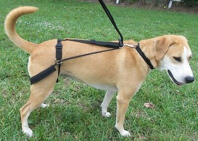 No Pulling & Jumping Horgan Dog Harness First Back Leg Harness - Invented by Vet