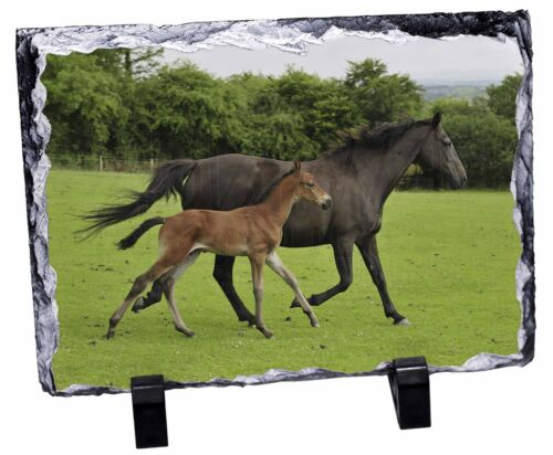 Mare with Newborn Foal Photo Slate Christmas Gift Ornament AH-11SL