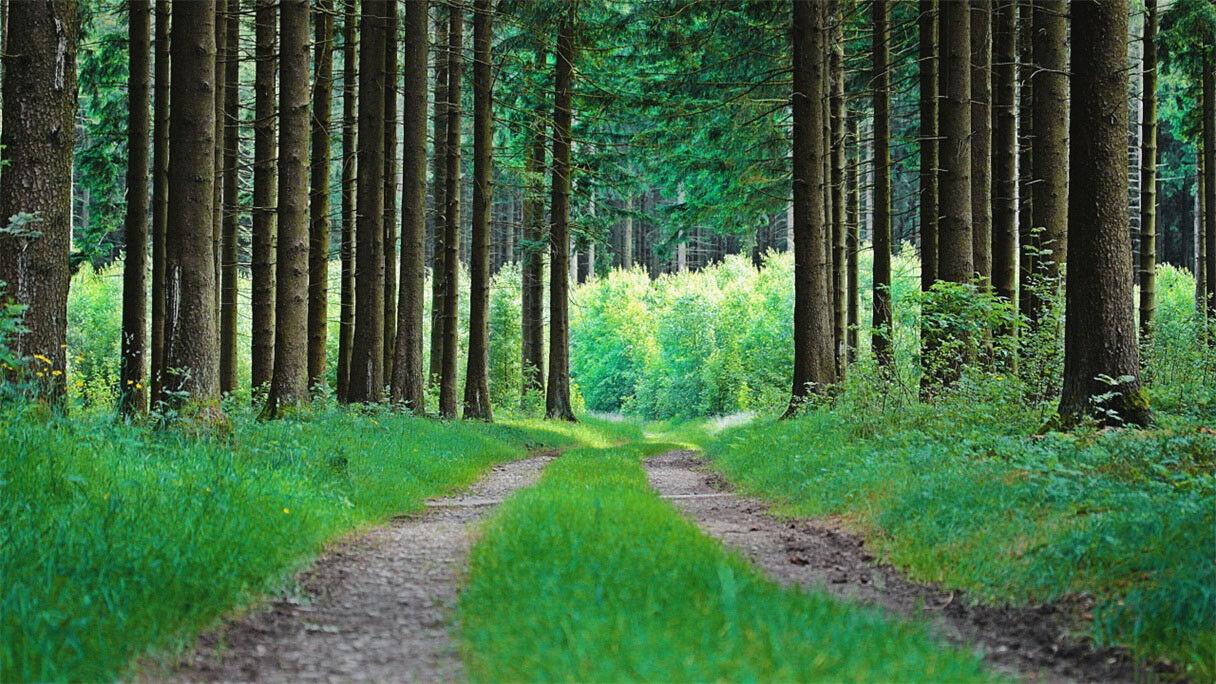 3D Wälder Grasiger Weg 9083 9083 9083 Tapete Wandgemälde Tapeten Bild Familie DE Jenny cdc9bd