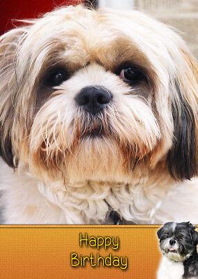 Shih Tzu Dog High Quality Birthday Card Free Delivery Ebay