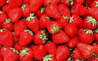 Strawberry Scented Premium Fragrance Oil For Candle/soap -u Pick Size