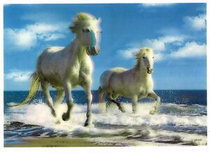 horse-seashore-3D-Lenticular-Holographic-Stereoscopic-Picture-Wall-Art