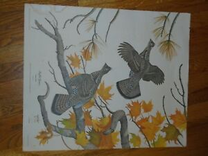 VINTAGE-1974-LITHOGRAPH-PRINT-1000-SIGNED-RON-JENKINS-24-X-20-RUFFED-GROUSE