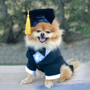 Mascota-perro-gracioso-graduacion-Sombrero-Con-Borla-graduado-Disfraz-Elaborado-Vestido-Amarillo-520
