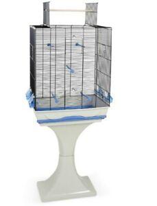 Canaris en perruche avec cage et patio