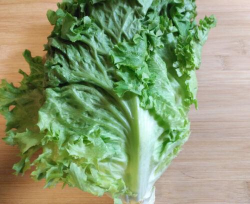 Loose Leaf Organic Black Seeded Simpson Lettuce Seeds 2 grams indoor//outdoor