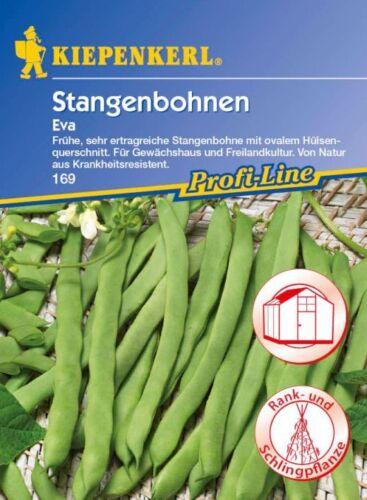 frühe sehr ertragreiche Bohne Stangenbohnen 169 Eva Kiepenkerl