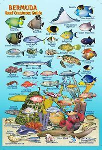 franko bermuda reef creatures guide laminated fish identification