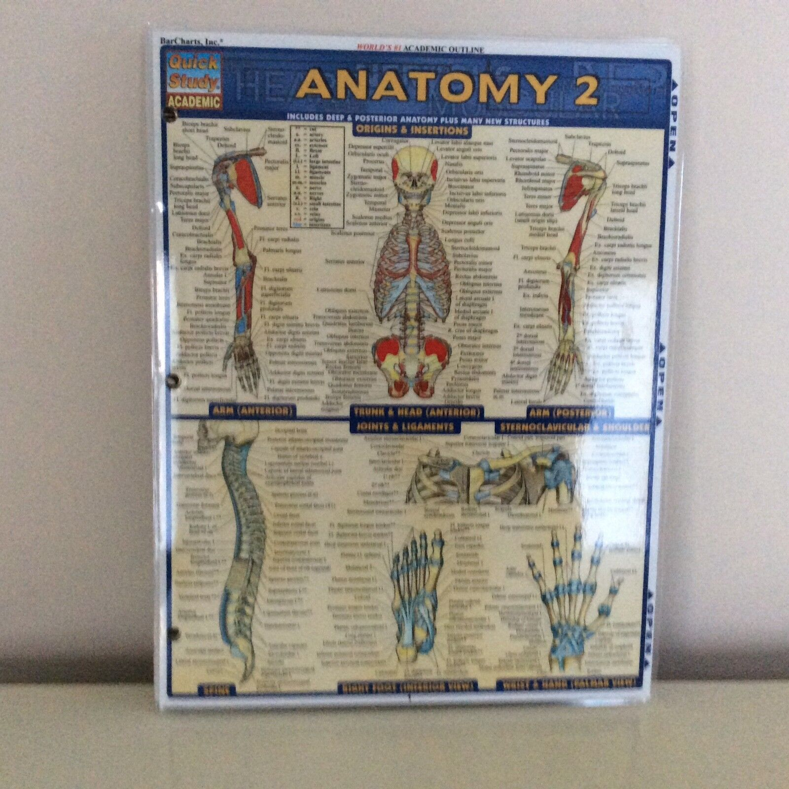 1 Sheet Quick Study Guide Laminated Chemistry Anatomy Biology