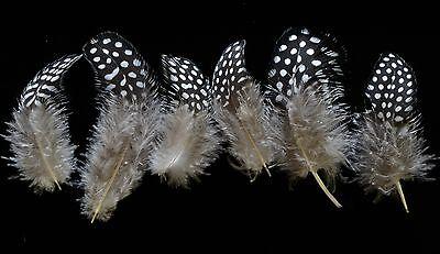 Lot de 200 plumes de pintades feather guinea folw, confection mouches, bijoux