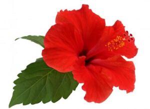 Dry Hibiscus Leaves Powder Gudhal Leaves Powder And Organic Herbs