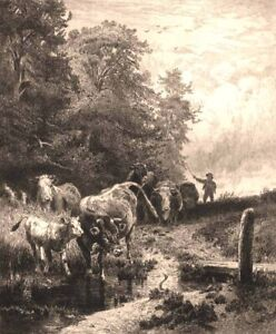 CATTLE BULL COW HORNS BY POND in WOODS ~ 1884 Original Art Print ETCHING  RARE!