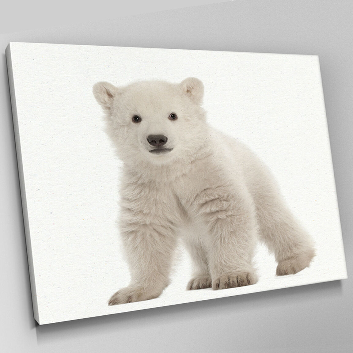 A349 Polar Bear Cub Adorable Stare Canvas Wall Art Animal Picture Large Print