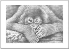 Baby Orangutan A4 Wildlife Fine Art Print Animal Ape dibujo a lápiz de imagen