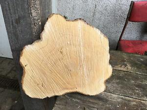 haya hornbeam blanco de 3 x madera panel del árbol 25 x 3