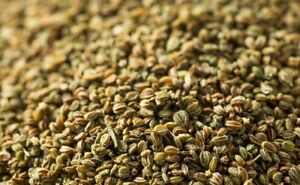 CELERY-Seeds-herbs-spices-Premium-quality-FREE-POSTAGE