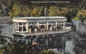 FL-Florida-FEEDING-BLACK-BASS-GLASS-BOTTOM-BOAT-Silver-Springs-c1940-039-s-Postcard
