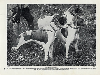 POINTER DOGS AT THE ULSTER GUN TRIALS OLD ORIGINAL 1934 DOG PRINT