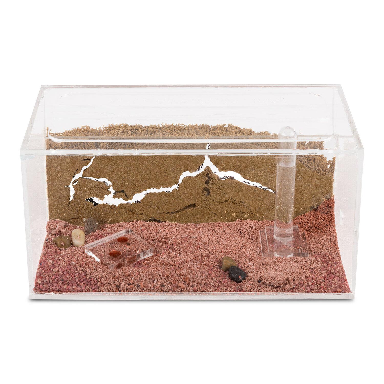 Ameisenfarm aus natürlichem Sand - Acryl Starter Set 20x10x10 (Gratis Ameisen)