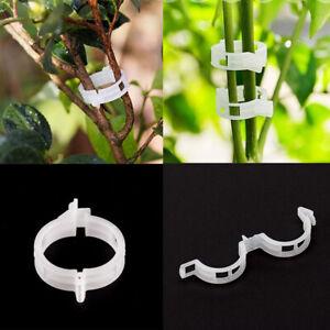 50-200Pcs-Veggie-Garden-Plant-Support-Clips-Trellis-Twine-Tomato-Greenhouse