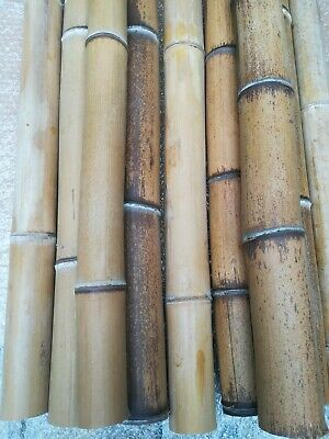 Canne di bambù giganti prezzo