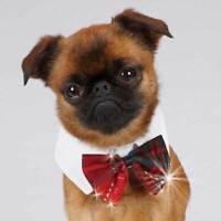 Tartan Yuletide Dog Bowties