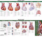 Anatomical Chart Company's Illustrated Pocket Anatomy: Anatomy of The Heart Study Guide by Lippincott Williams and Wilkins (Fold-out book or chart, 2007)