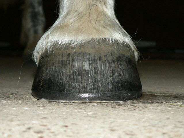 PRO HOOF 27 Kg Equine Balancer For Healthy Hooves Coat Skin Joints And Digestion