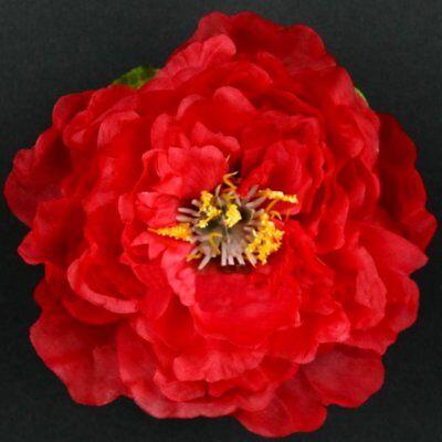 10 x Pfingstrosenblüte  Pfingstrose Peonie rot  Blumenköpfe