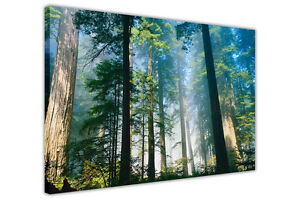 Tall Tree Forest on Framed Canvas Wall Art Home Deco Pictures ...