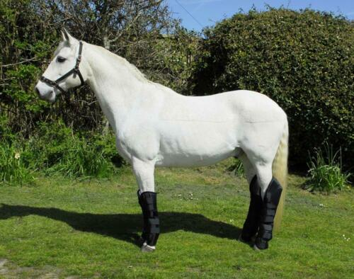 Rhinegold Full Length Horse Travel Boots in Black or Navy